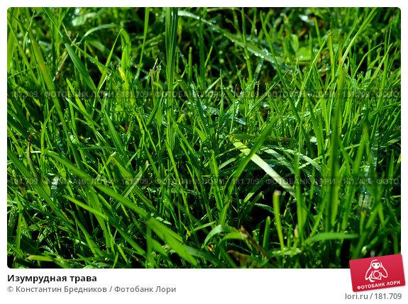 Изумрудная трава, фото № 181709, снято 15 октября 2006 г. (c) Константин Бредников / Фотобанк Лори