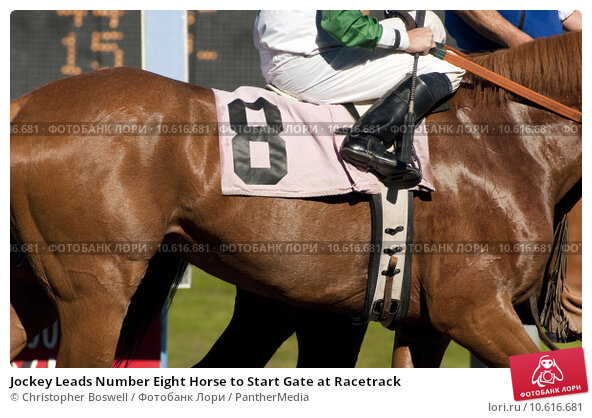 Jockey Leads Number Eight Horse to Start Gate at Racetrack. Стоковое фото, фотограф Christopher Boswell / PantherMedia / Фотобанк Лори