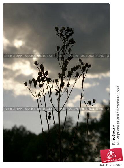 Купить «К небесам», фото № 55989, снято 4 июня 2007 г. (c) Смирнова Лидия / Фотобанк Лори