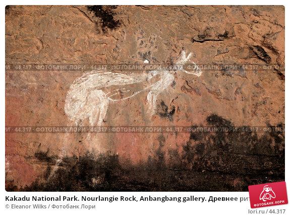 Kakadu National Park. Nourlangie Rock, Anbangbang gallery. Древнее ритуальное изображение белого кенгуру, фото № 44317, снято 4 июня 2007 г. (c) Eleanor Wilks / Фотобанк Лори