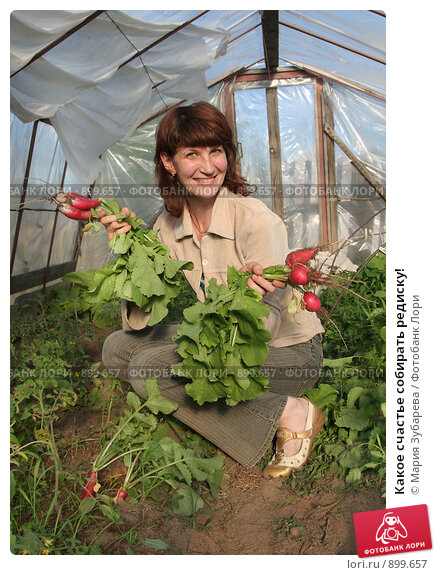 Купить «Какое счастье собирать редиску!», эксклюзивное фото № 899657, снято 30 мая 2009 г. (c) Мария Зубарева / Фотобанк Лори