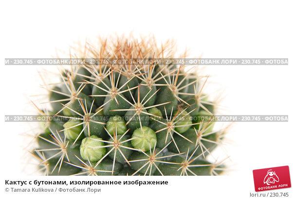 Кактус с бутонами, изолированное изображение, фото № 230745, снято 23 марта 2008 г. (c) Tamara Kulikova / Фотобанк Лори
