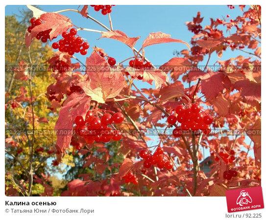 Купить «Калина осенью», эксклюзивное фото № 92225, снято 30 сентября 2007 г. (c) Татьяна Юни / Фотобанк Лори