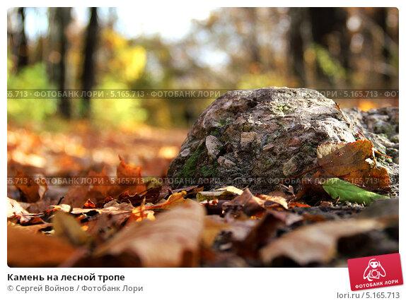 Камень на лесной тропе. Стоковое фото, фотограф Сергей Войнов / Фотобанк Лори