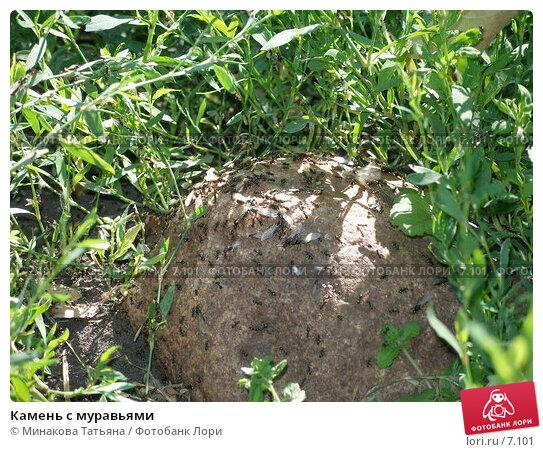 Камень с муравьями, фото № 7101, снято 25 июля 2006 г. (c) Минакова Татьяна / Фотобанк Лори