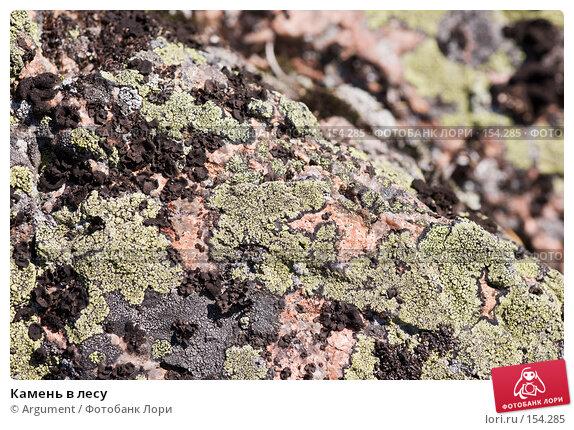 Купить «Камень в лесу», фото № 154285, снято 10 августа 2007 г. (c) Argument / Фотобанк Лори