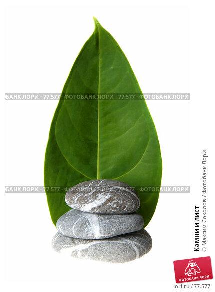 Купить «Камни и лист», фото № 77577, снято 24 июля 2007 г. (c) Максим Соколов / Фотобанк Лори