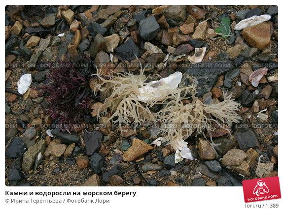 Камни и водоросли на морском берегу, эксклюзивное фото № 1389, снято 17 сентября 2005 г. (c) Ирина Терентьева / Фотобанк Лори