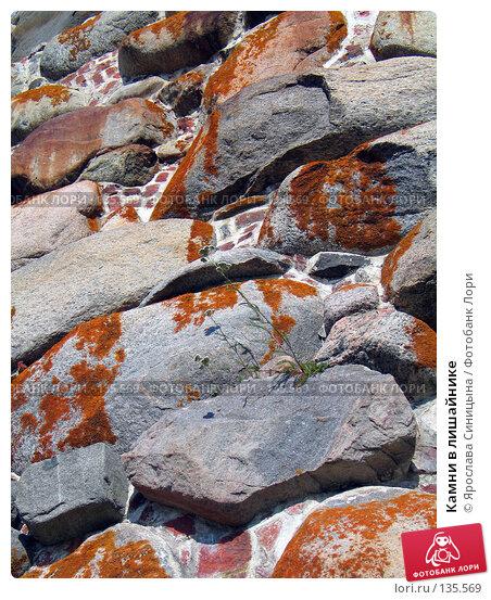 Камни в лишайнике, фото № 135569, снято 16 августа 2007 г. (c) Ярослава Синицына / Фотобанк Лори