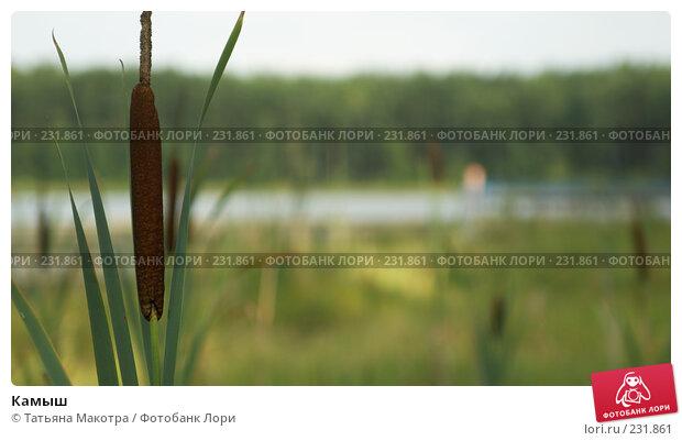 Камыш, фото № 231861, снято 12 августа 2006 г. (c) Татьяна Макотра / Фотобанк Лори