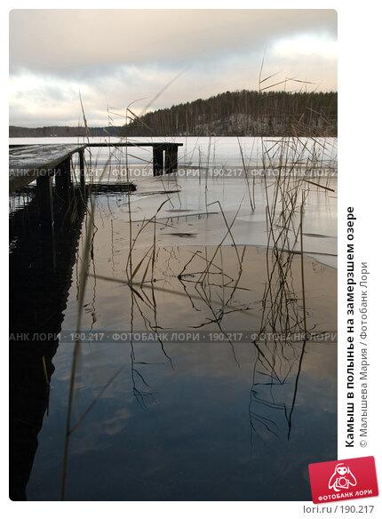 Камыш в полынье на замерзшем озере, фото № 190217, снято 22 декабря 2007 г. (c) Малышева Мария / Фотобанк Лори