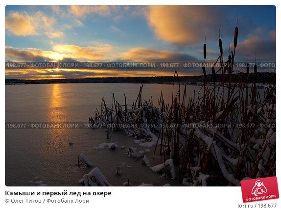 Купить «Камыши и первый лед на озере», фото № 198677, снято 11 ноября 2006 г. (c) Олег Титов / Фотобанк Лори