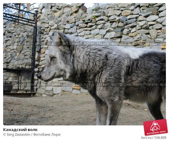 Канадский волк, фото № 134609, снято 10 октября 2004 г. (c) Serg Zastavkin / Фотобанк Лори