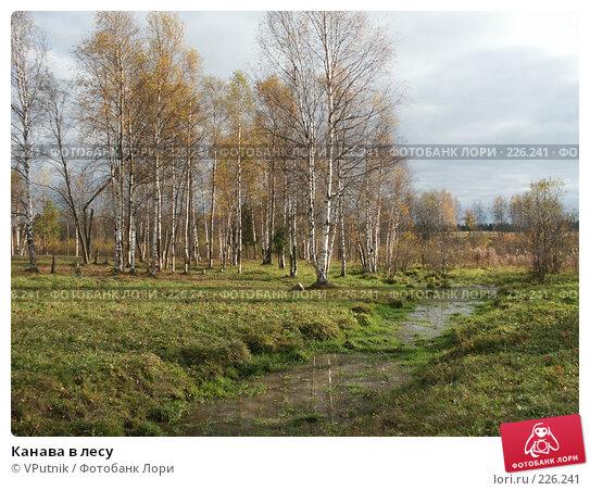 Канава в лесу, фото № 226241, снято 8 октября 2005 г. (c) VPutnik / Фотобанк Лори
