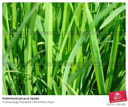 Капельки росы в траве, фото № 300453, снято 8 мая 2008 г. (c) Александр Новиков / Фотобанк Лори