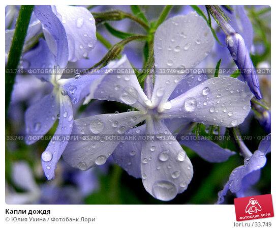 Капли дождя, фото № 33749, снято 7 мая 2006 г. (c) Юлия Ухина / Фотобанк Лори