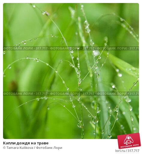 Капли дождя на траве, фото № 317717, снято 3 июня 2008 г. (c) Tamara Kulikova / Фотобанк Лори