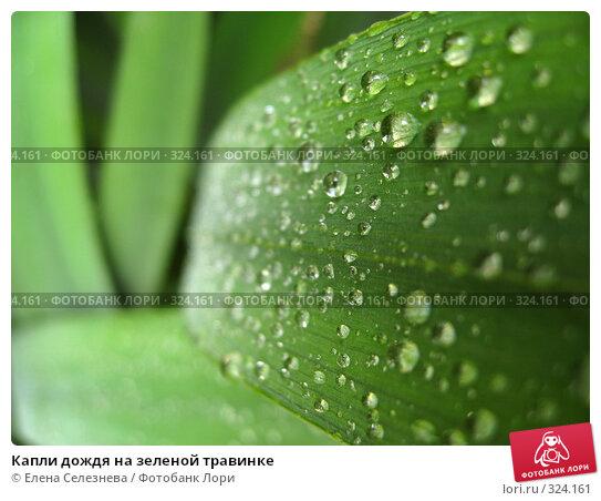 Капли дождя на зеленой травинке, фото № 324161, снято 15 июня 2008 г. (c) Елена Селезнева / Фотобанк Лори