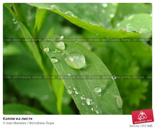 Купить «Капли на листе», фото № 317945, снято 10 июня 2008 г. (c) Ivan Markeev / Фотобанк Лори