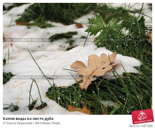 Купить «Капли воды на листе дуба», фото № 147529, снято 11 ноября 2007 г. (c) Ольга Хорькова / Фотобанк Лори