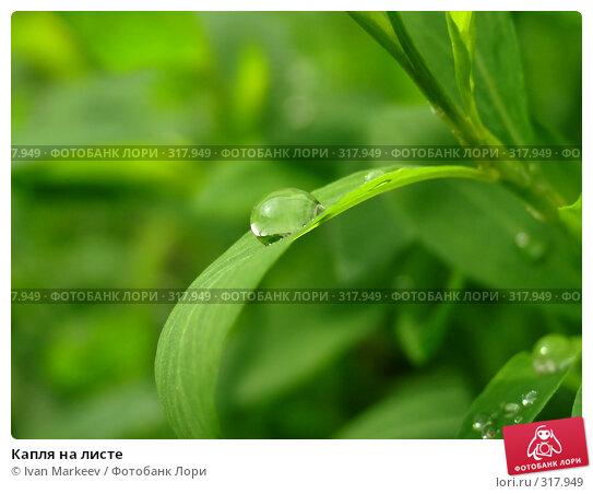 Купить «Капля на листе», фото № 317949, снято 10 июня 2008 г. (c) Ivan Markeev / Фотобанк Лори