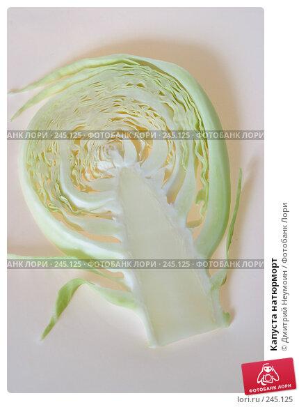 Купить «Капуста натюрморт», эксклюзивное фото № 245125, снято 9 августа 2004 г. (c) Дмитрий Неумоин / Фотобанк Лори