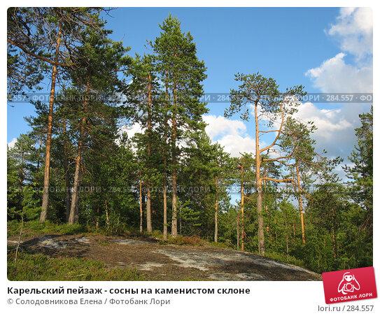 Карельский пейзаж - сосны на каменистом склоне, фото № 284557, снято 29 июля 2007 г. (c) Солодовникова Елена / Фотобанк Лори