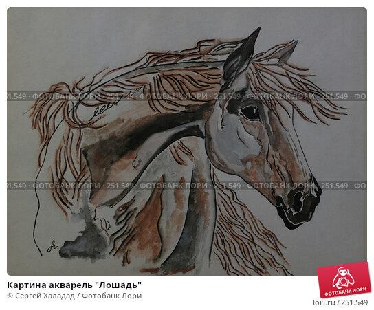 """Купить «Картина акварель """"Лошадь""""», иллюстрация № 251549 (c) Сергей Халадад / Фотобанк Лори"""