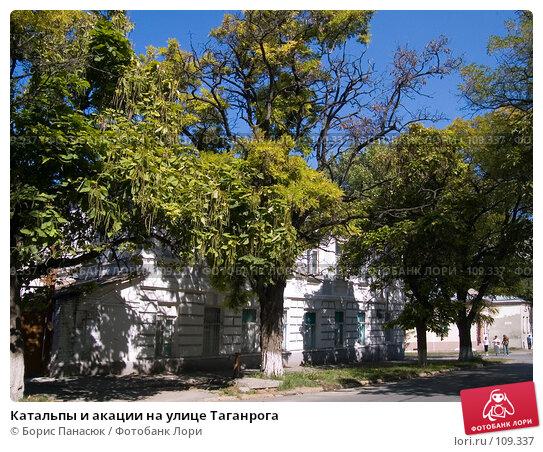 Катальпы и акации на улице Таганрога, фото № 109337, снято 18 августа 2006 г. (c) Борис Панасюк / Фотобанк Лори