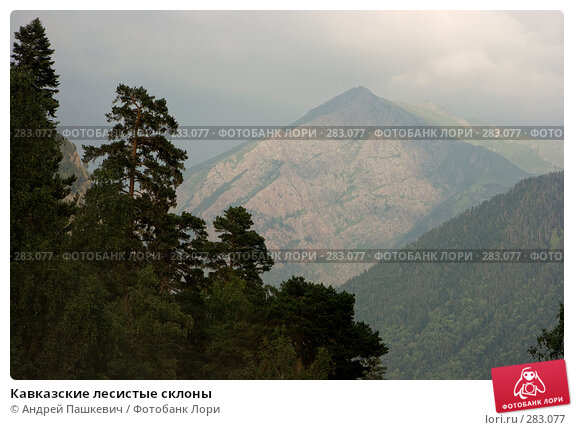 Кавказские лесистые склоны, фото № 283077, снято 22 июля 2007 г. (c) Андрей Пашкевич / Фотобанк Лори