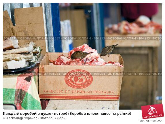 Каждый воробей в душе - ястреб (Воробьи клюют мясо на рынке), фото № 104253, снято 28 октября 2016 г. (c) Александр Чураков / Фотобанк Лори