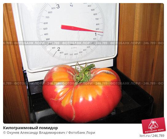 Купить «Килограммовый помидор», фото № 246789, снято 26 августа 2007 г. (c) Окунев Александр Владимирович / Фотобанк Лори