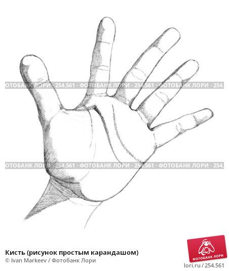 Кисть (рисунок простым карандашом), иллюстрация № 254561 (c) Василий Каргандюм / Фотобанк Лори