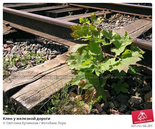Клен у железной дороги, фото № 66281, снято 26 июня 2017 г. (c) Светлана Кучинская / Фотобанк Лори
