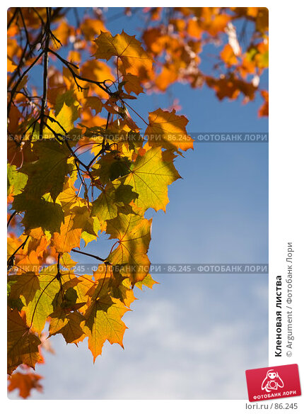 Кленовая листва, фото № 86245, снято 20 сентября 2007 г. (c) Argument / Фотобанк Лори