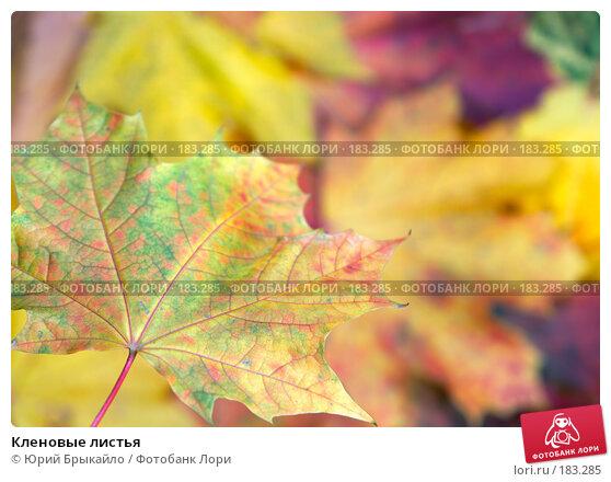 Кленовые листья, фото № 183285, снято 22 октября 2007 г. (c) Юрий Брыкайло / Фотобанк Лори