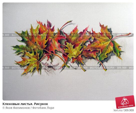 Кленовые листья. Рисунок, фото № 309909, снято 25 апреля 2008 г. (c) Яков Филимонов / Фотобанк Лори