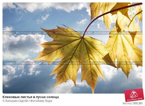 Кленовые листья в лучах солнца, фото № 309381, снято 17 мая 2008 г. (c) Катыкин Сергей / Фотобанк Лори
