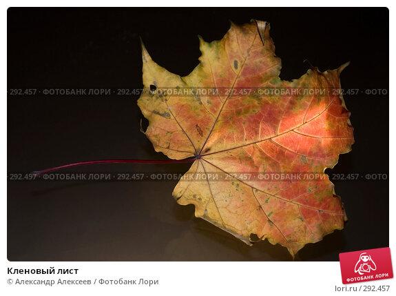 Кленовый лист, эксклюзивное фото № 292457, снято 29 октября 2006 г. (c) Александр Алексеев / Фотобанк Лори