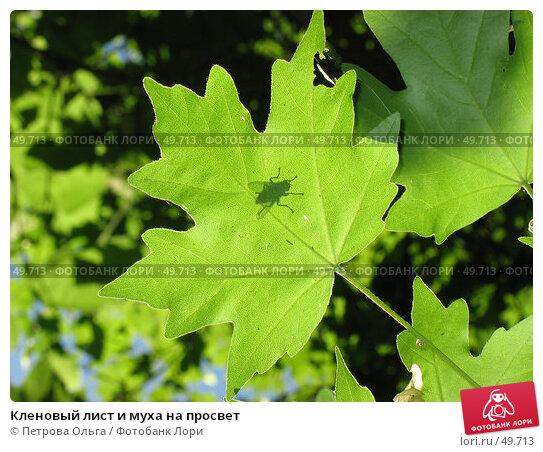Кленовый лист и муха на просвет, фото № 49713, снято 3 июня 2007 г. (c) Петрова Ольга / Фотобанк Лори