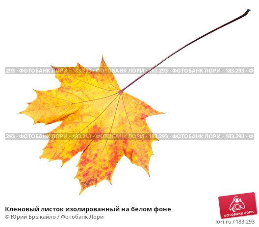 Купить «Кленовый листок изолированный на белом фоне», фото № 183293, снято 24 октября 2007 г. (c) Юрий Брыкайло / Фотобанк Лори