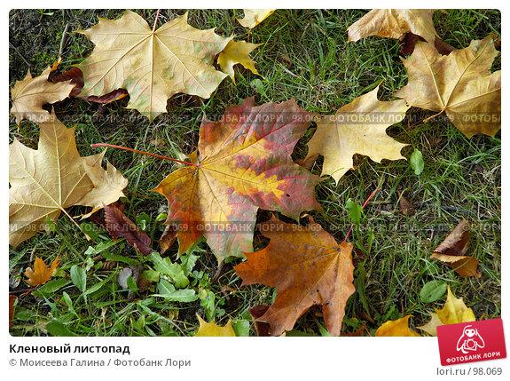 Кленовый листопад, фото № 98069, снято 29 сентября 2007 г. (c) Моисеева Галина / Фотобанк Лори