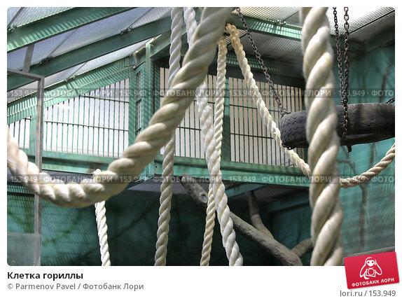 Клетка гориллы, фото № 153949, снято 11 декабря 2007 г. (c) Parmenov Pavel / Фотобанк Лори
