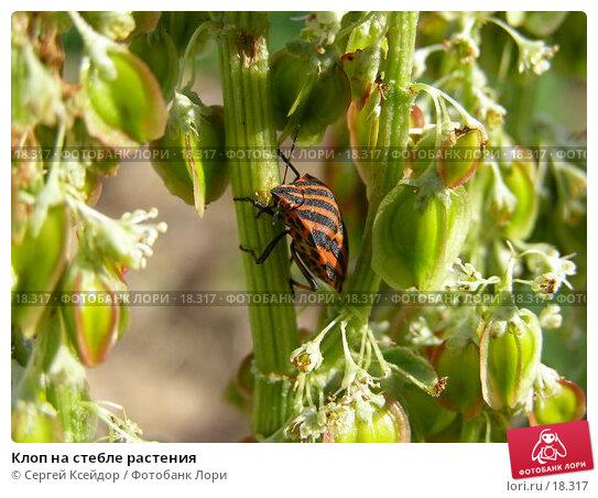 Клоп на стебле растения, фото № 18317, снято 13 июня 2006 г. (c) Сергей Ксейдор / Фотобанк Лори