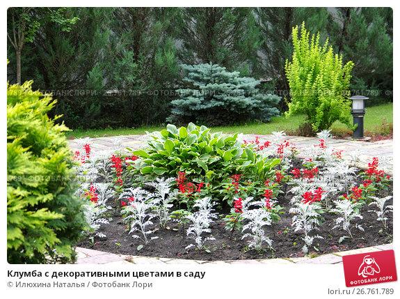 Купить «Клумба с декоративными цветами в саду», фото № 26761789, снято 5 июля 2017 г. (c) Илюхина Наталья / Фотобанк Лори