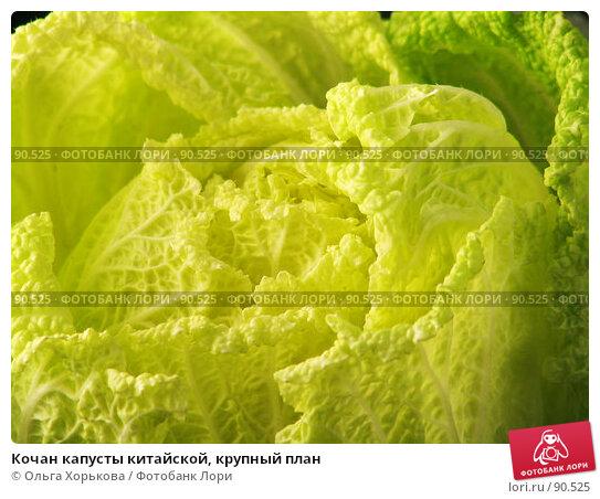 Кочан капусты китайской, крупный план, фото № 90525, снято 15 сентября 2007 г. (c) Ольга Хорькова / Фотобанк Лори