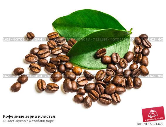 Купить «Кофейные зёрна и листья», фото № 7121629, снято 10 марта 2015 г. (c) Олег Жуков / Фотобанк Лори