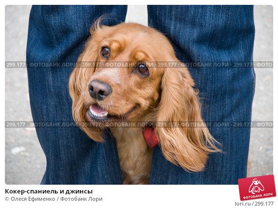 Кокер-спаниель и джинсы, фото № 299177, снято 25 мая 2008 г. (c) Олеся Ефименко / Фотобанк Лори