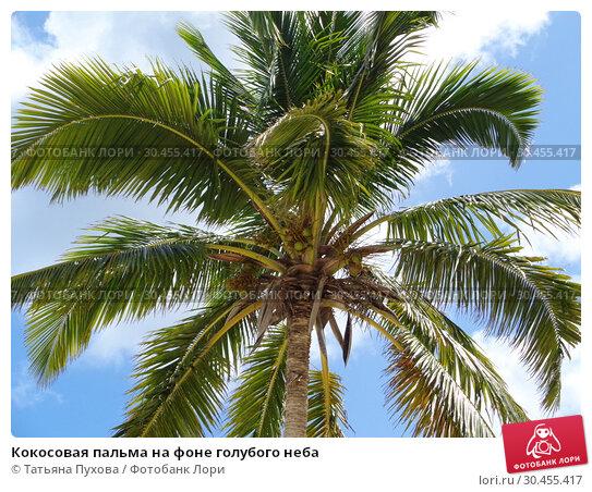 Кокосовая пальма на фоне голубого неба. Стоковое фото, фотограф Татьяна Пухова / Фотобанк Лори