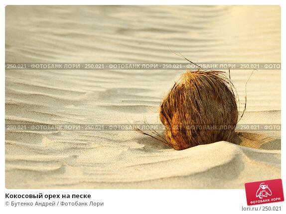 Кокосовый орех на песке, фото № 250021, снято 29 декабря 2007 г. (c) Бутенко Андрей / Фотобанк Лори
